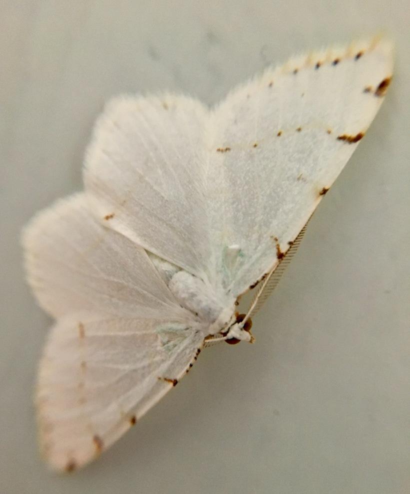 Moth up close